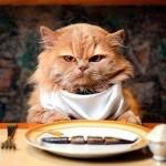 Вкусно и полезно: чем нужно кормить кота