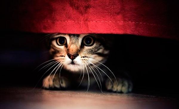хозяин поругал кошку