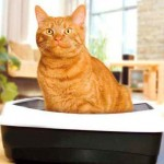 Как отучить кошку гадить дома: проверенные способы и простые советы
