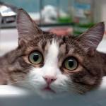 Как отучить гадить где попало кота: полезные советы
