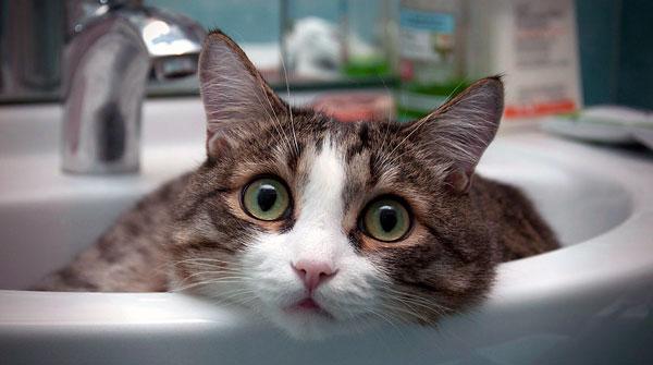 После кастрации коты гадят где попало