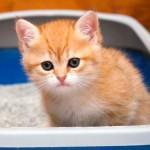 Как отучить котенка гадить дома: простые советы