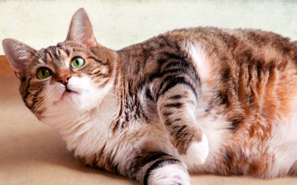 начало родов у кошки