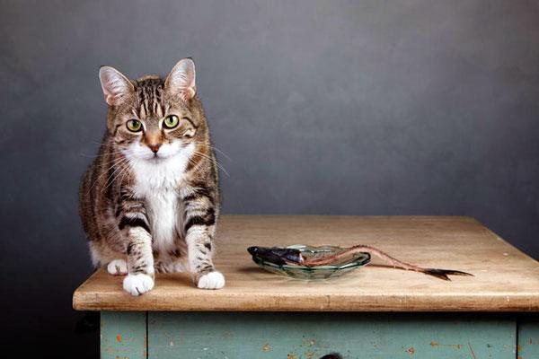 Натуральная пища для кастрированных котов