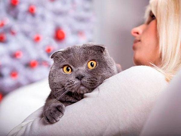 способы как отучить кошку гадить