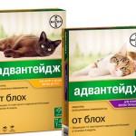 Адвантейдж для кошек: блохи не пройдут