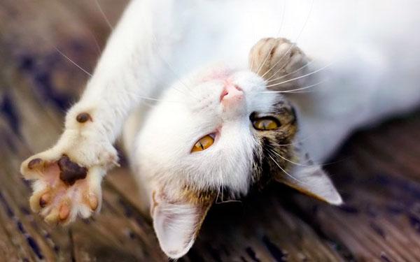 довольная кошка без блох