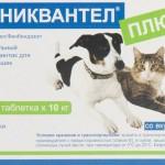 Каниквантел для кошек: жизнь без паразитов