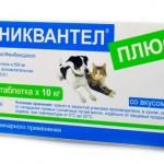 Каниквантел для собак: эффективное средство против паразитов