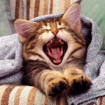Почему котенок чихает: причины появления тревожного симптома