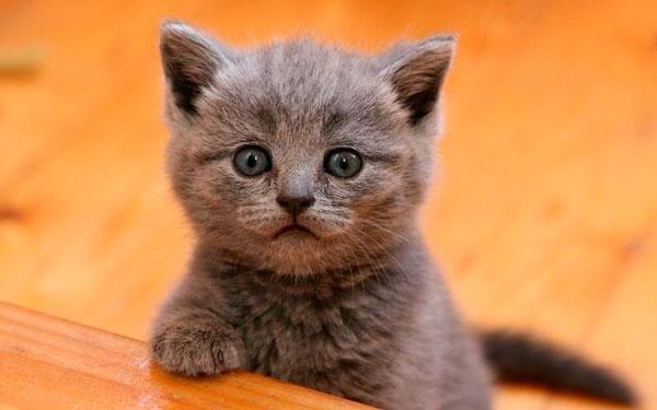 маленький котенок чихает