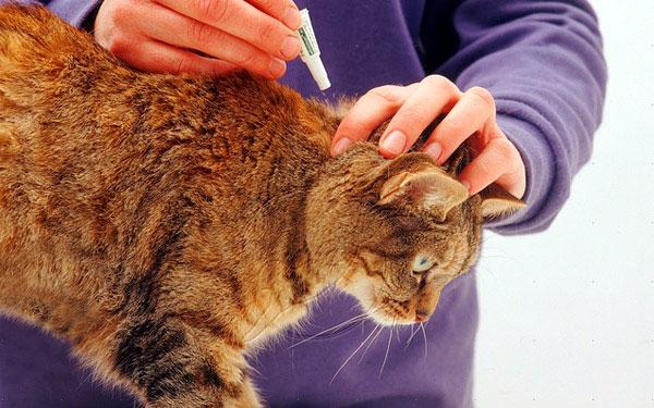 обработка кошки каплями от паразитов