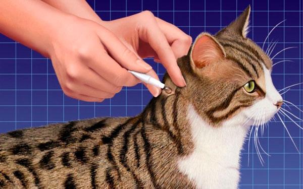 обработка кошки каплями Стронгхолд