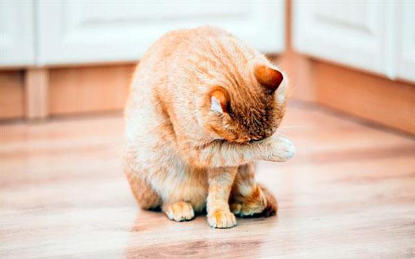 Почему котенок чихает