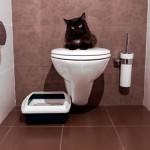 У кошки понос: лечим расстройство желудка правильно