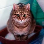 У кота понос: как лечить расстройство желудка домашнего питомца