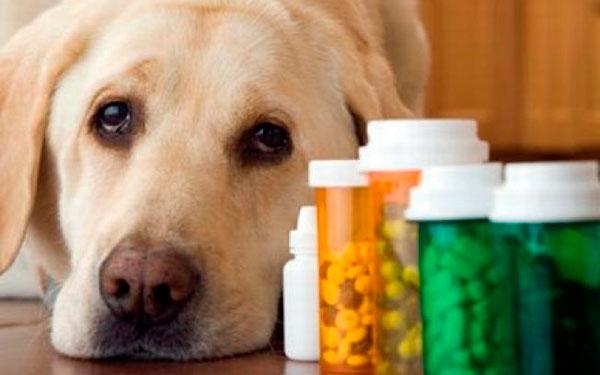 псу дают таблетки от глистов