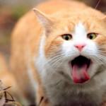 У кота рвота: необходимая информация