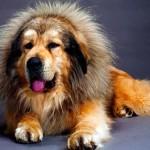 Топ-10: самые дорогие собаки в мире