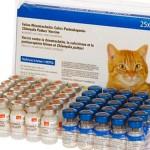 Нобивак для кошек: защита от инфекций