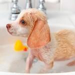 Шампуни для собак: виды и правила использования