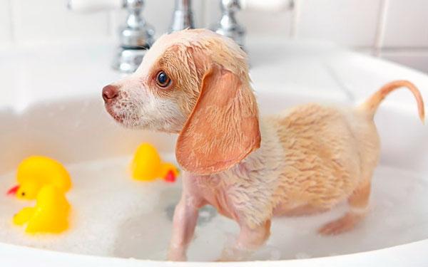 Правила применения щампуня для собак