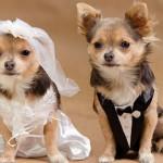 Вязка собак: важные особенности деликатного процесса