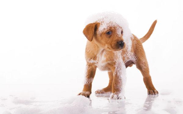 Выбор шампуня для собаки