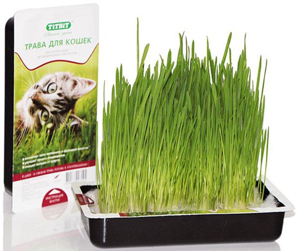Как правильно сажать траву