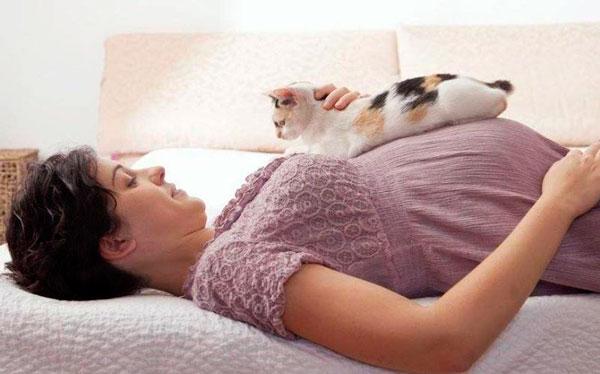 кошка на животе у беременной