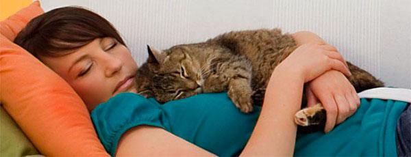 кошка спит на хозяйке