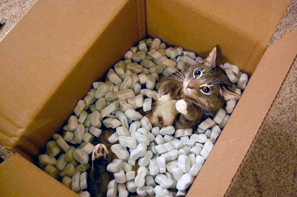 кошки любят картон