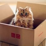 Повадки и привычки: почему кошки любят картонные коробки