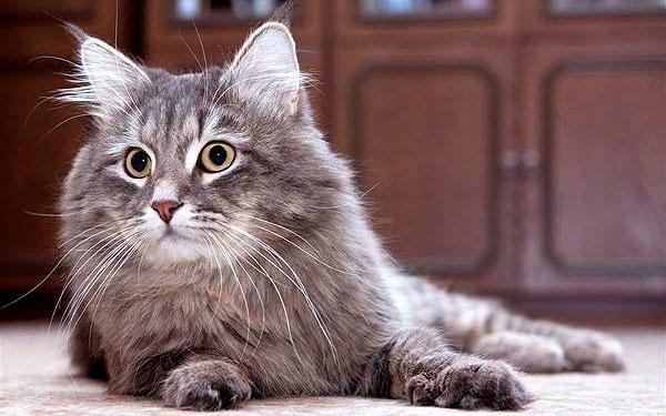 кот после приема валерьянки
