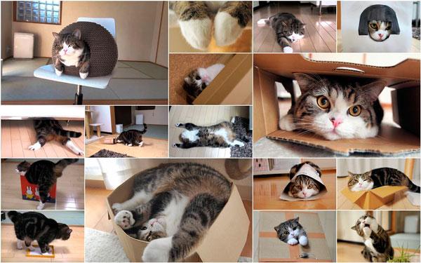 коты в домиках