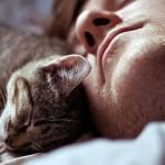Совместный сон: почему кошка ложится на человека