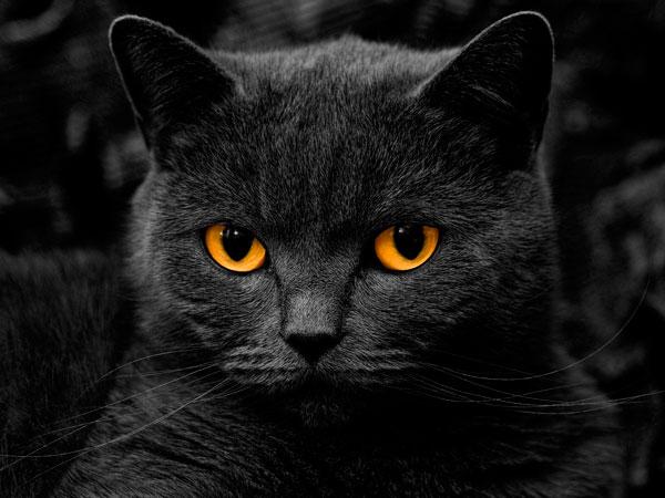 Почему кошка смотрит на человека