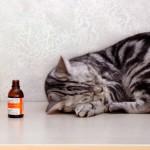 Лекарство или яд: почему кошки любят валерьянку
