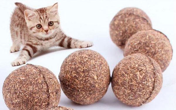 Полезные свойства кошачьей мяты