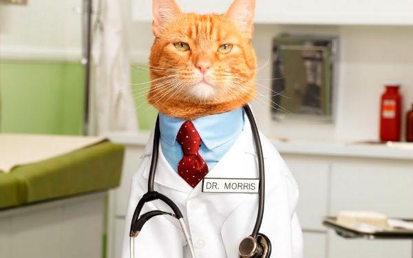 Респираторный кашель у кошки