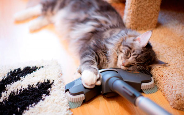 кот в обнимку с пылесосом