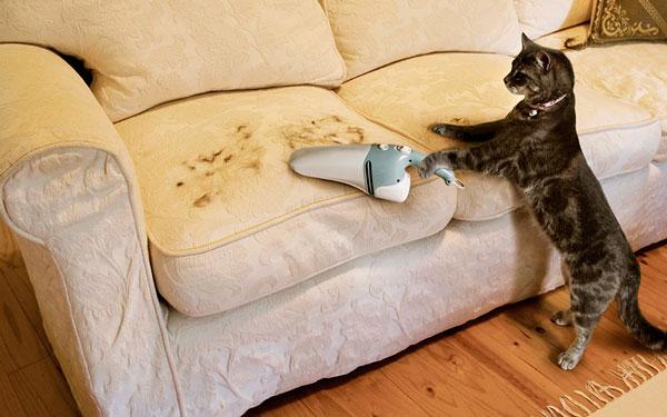 отучить кошку от боязни пылесоса
