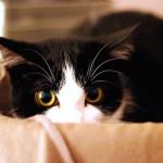 Кошка и пылесос: почему домашние питомцы боятся шумных электроприборов