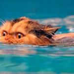 Коты и вода: почему домашние питомцы боятся водных процедур