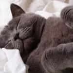 Почему коты так много спят: причины долгого сна