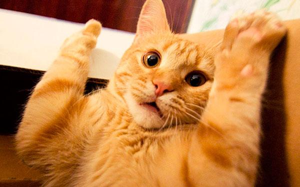 Причины поведения кота