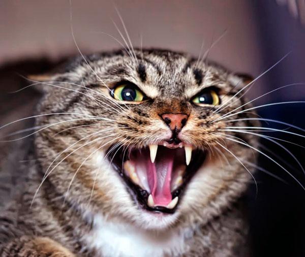 Причины развития стресса у кошек