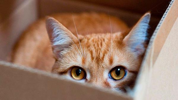 Признаки стрессового состояния у котов