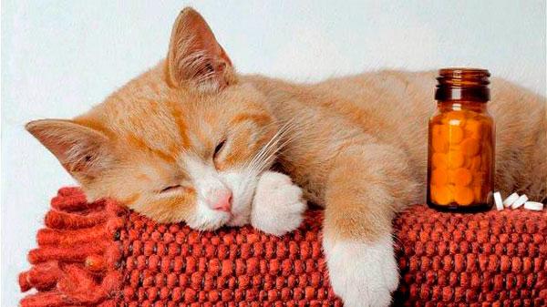 Способы борьбы со стрессом у котов