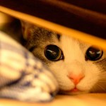 Стрессы у котов: причины, признаки и методы борьбы